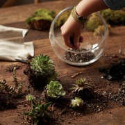gardening 101 indoor terrarium how to ; Gardenista