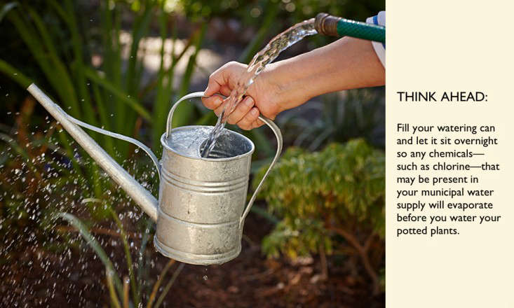 gardening 101 water plants with filtered water l Gardenista