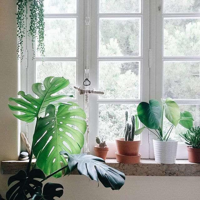 gardenista-indoors-and-gom