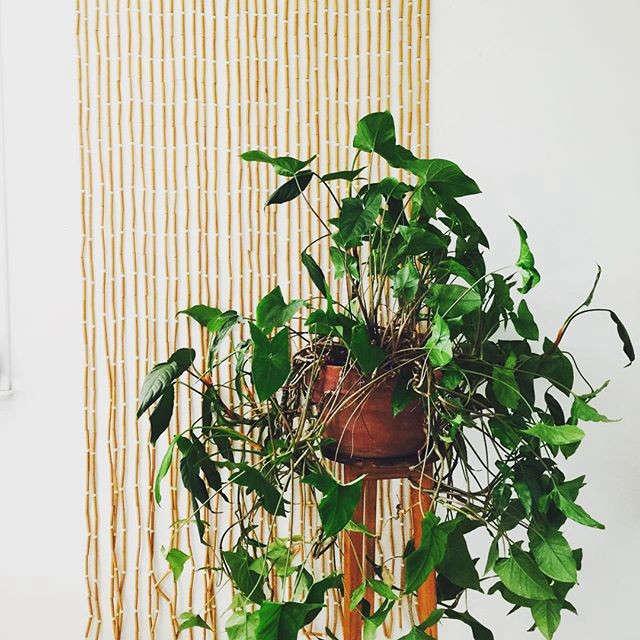 gardenista-indoors-beacon9995