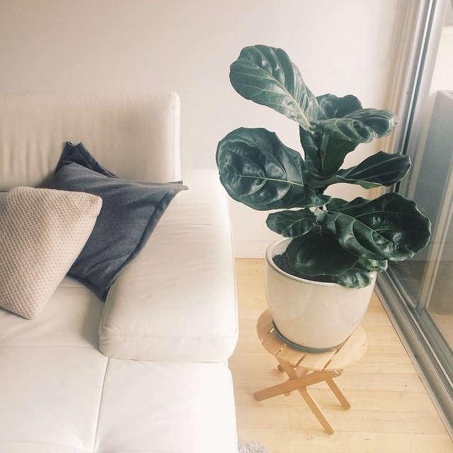 gardenista-indoors-jaejin