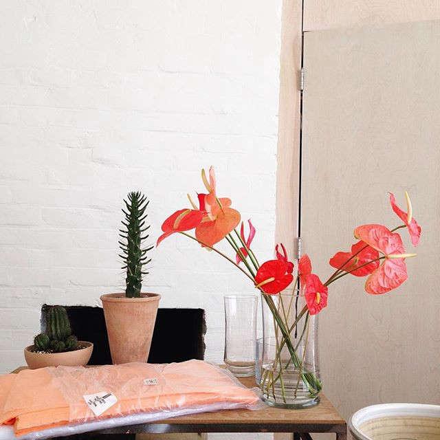gardenista-indoors-wafflesoph-2