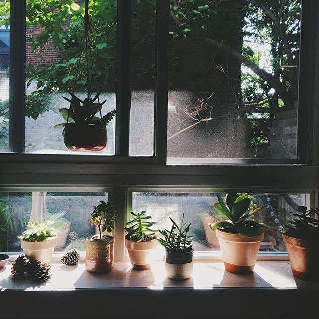 gardenista-indoors-wildthingsbotanical