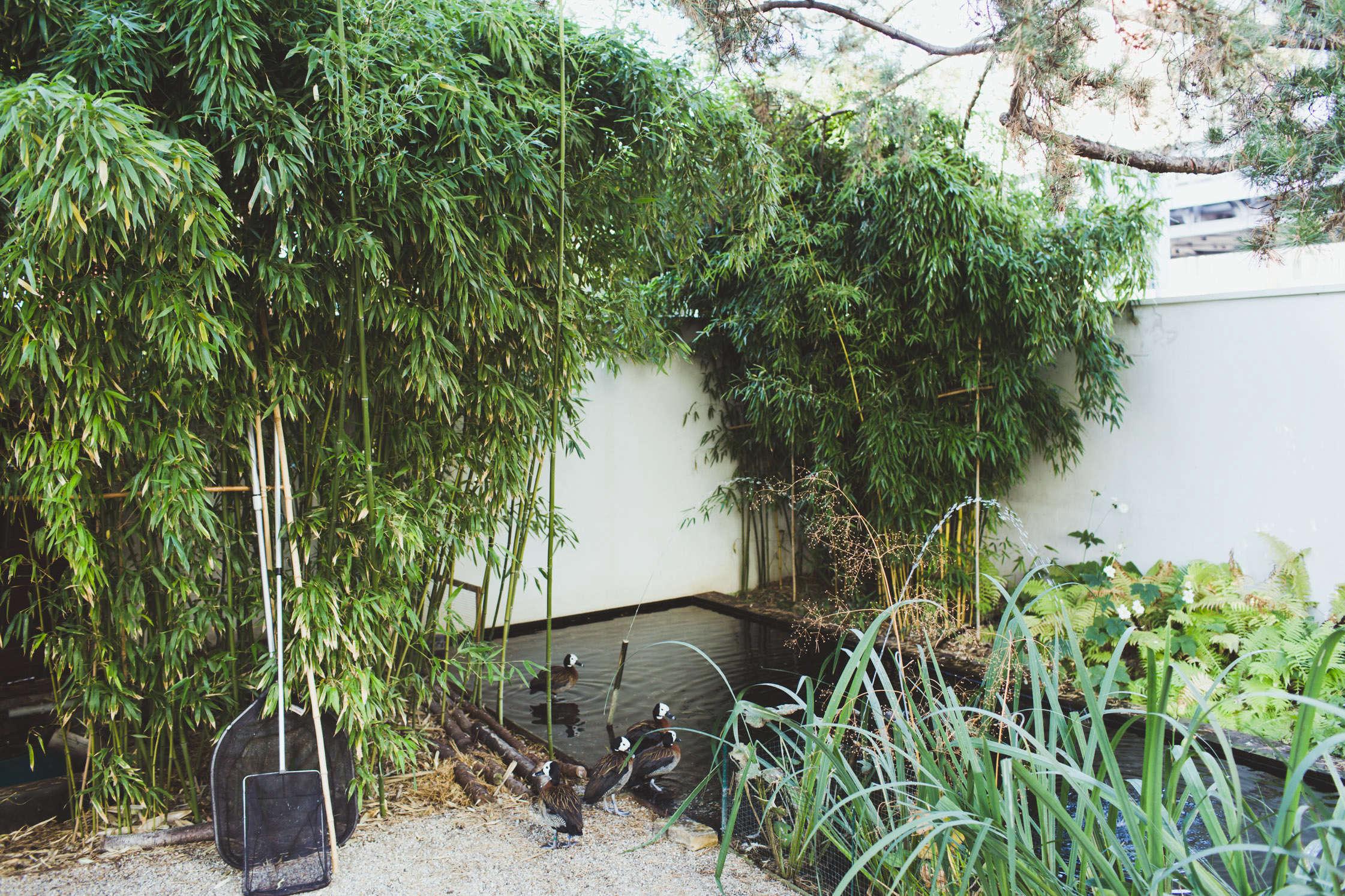 gas-station-garden-pond-Freunde-von-Freunden-Juerg-Judin-gardenista