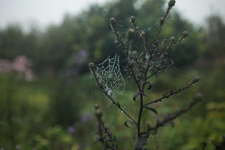 glendon-aster-web