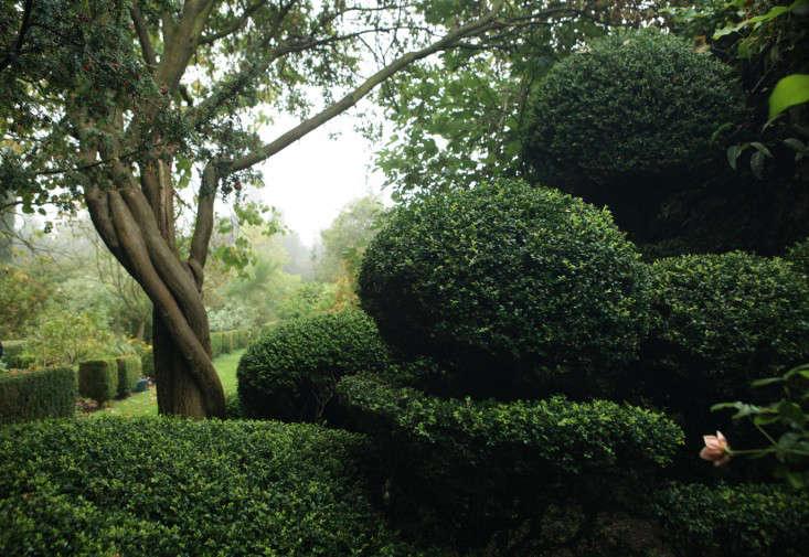 glendon-topiary