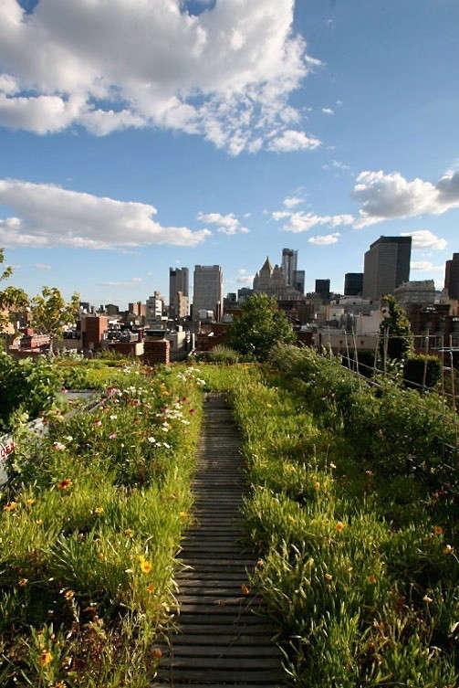 goode-green-roof-wildflower-meadow-nyc-gardenista