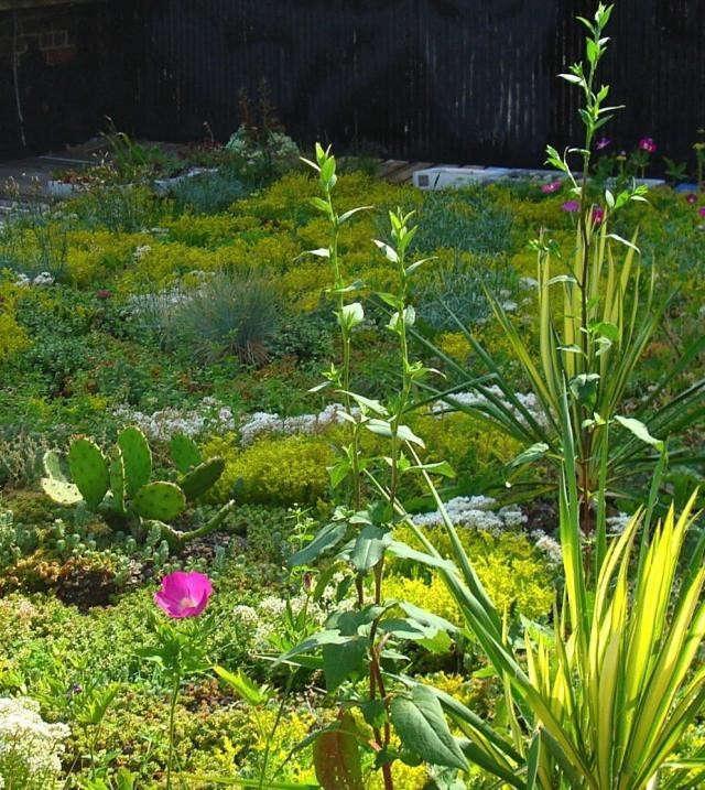 green-roof-nyc-cactus-fescuegardenista