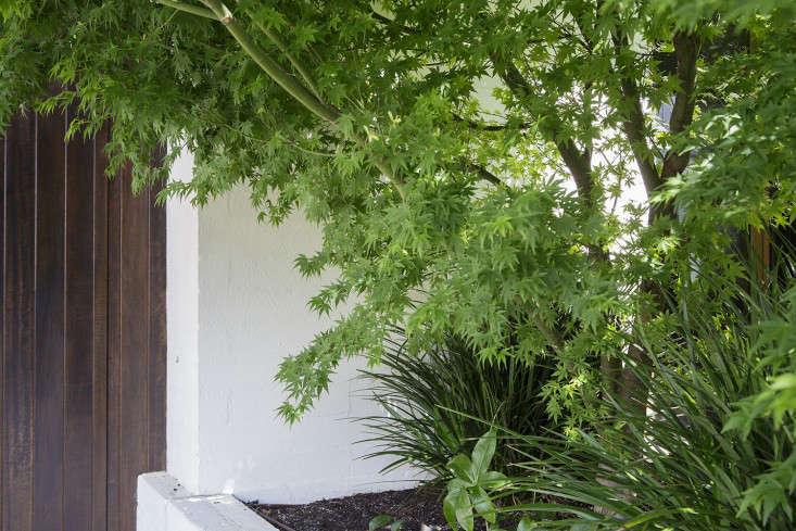 grounded-gardens-courtyard-garden-acer-palmatum-maple-gardenista