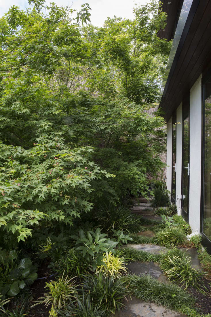 grounded-gardens-courtyard-garden-maple-tree-facade-exteriors-gardenista