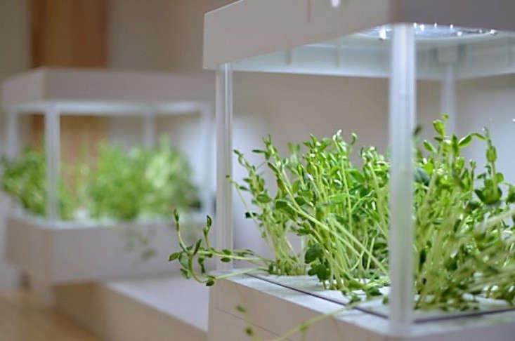 10 easy pieces grow lights for indoor plants gardenista workwithnaturefo