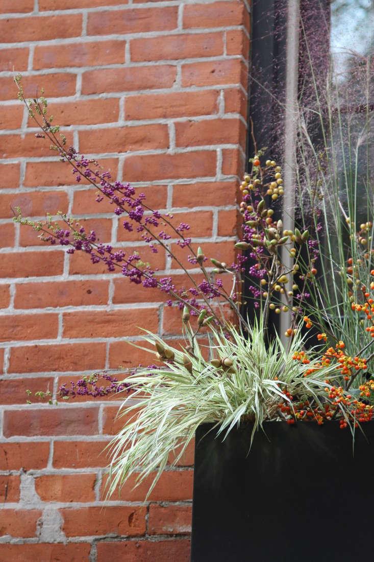 halloween-planter-2-erinboyle-gardenista