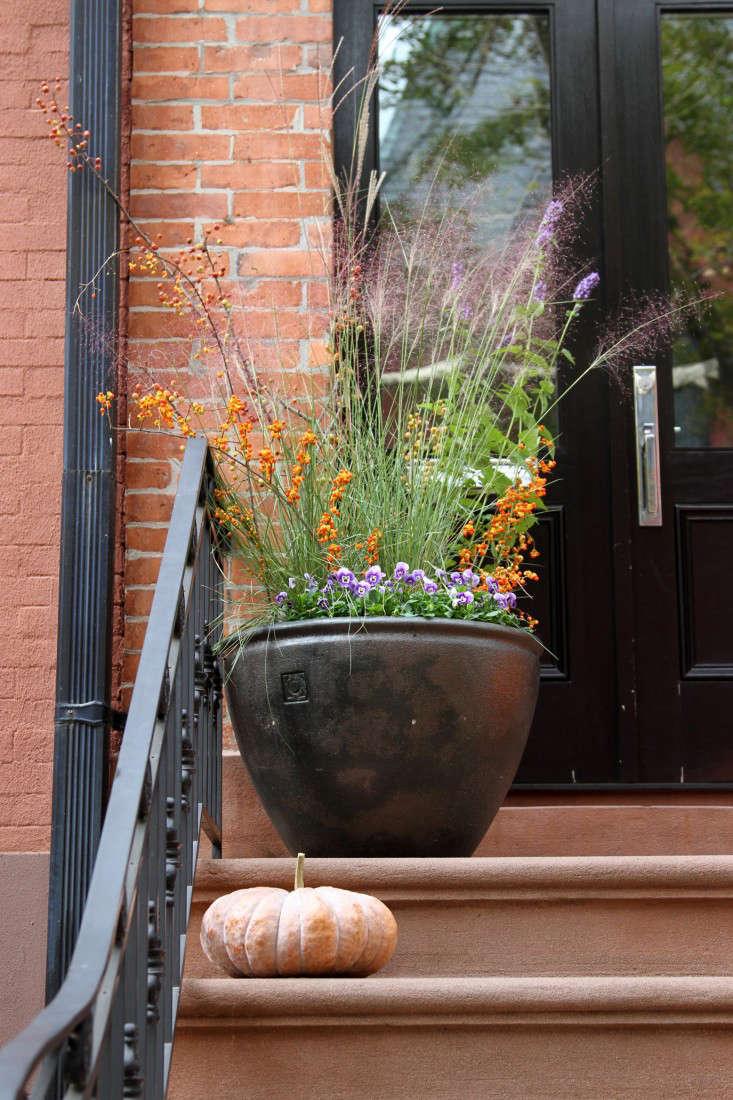 halloween-planter-3-erinboyle-gardenista