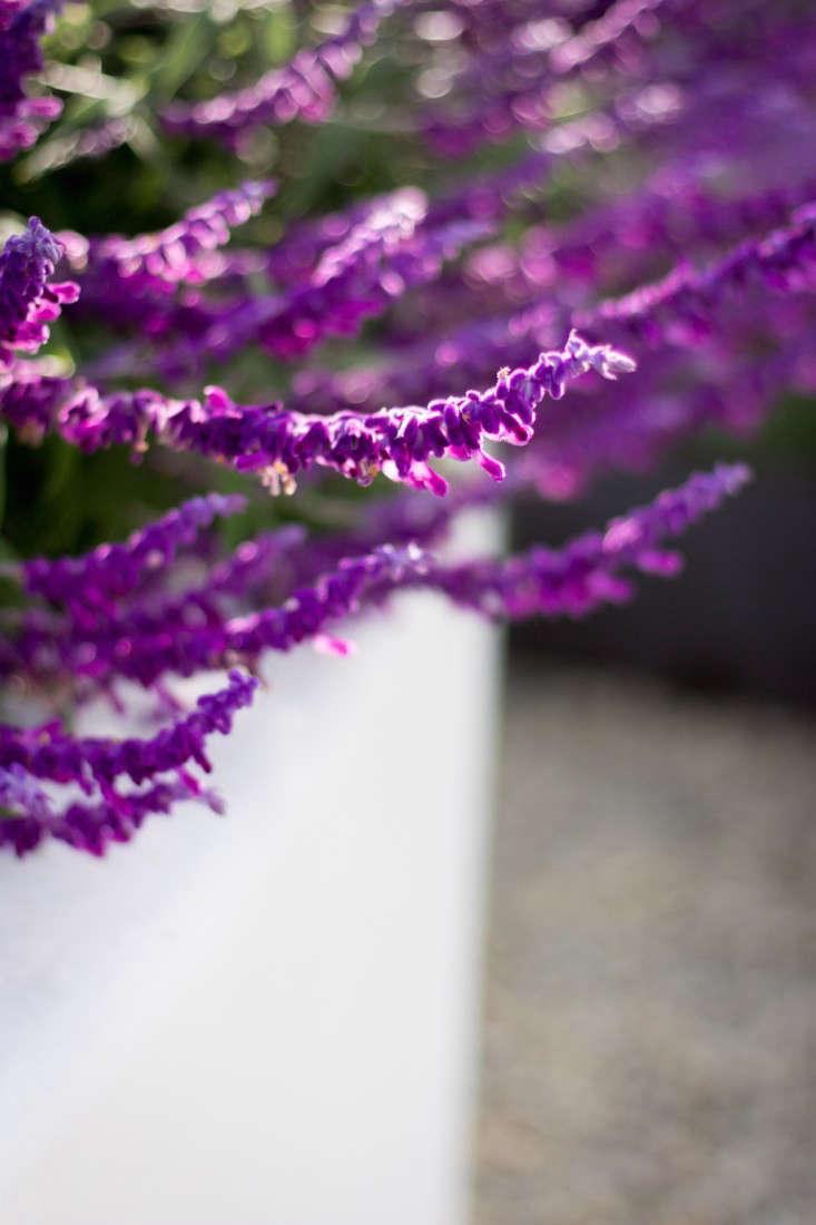 hancock-park-la-garden-visit-stucco-spanish-succulents-gardenista-0288