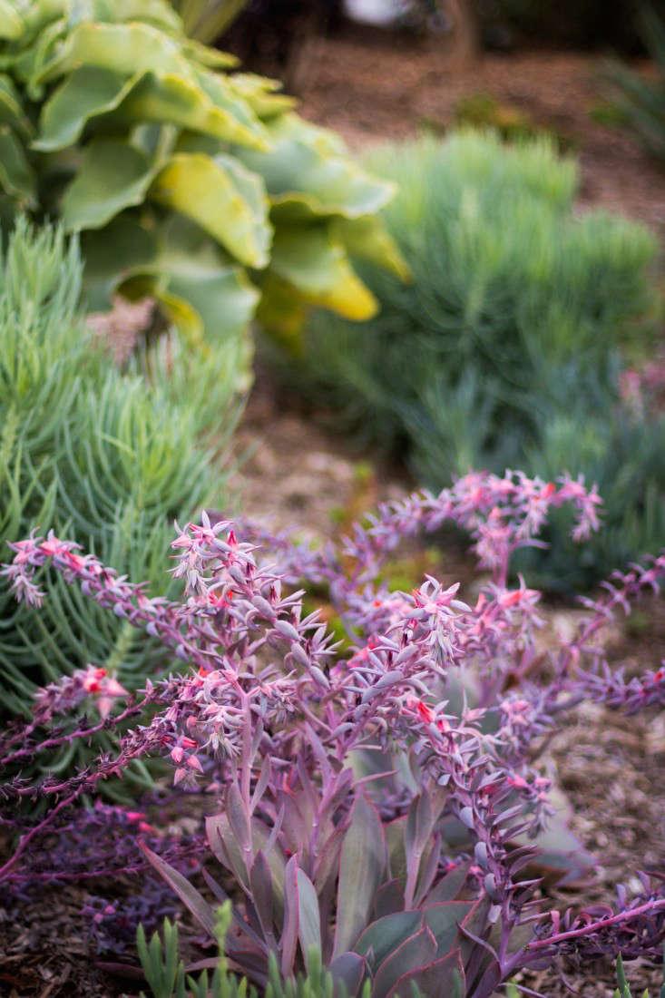 hancock-park-la-garden-visit-stucco-spanish-succulents-gardenista-0409