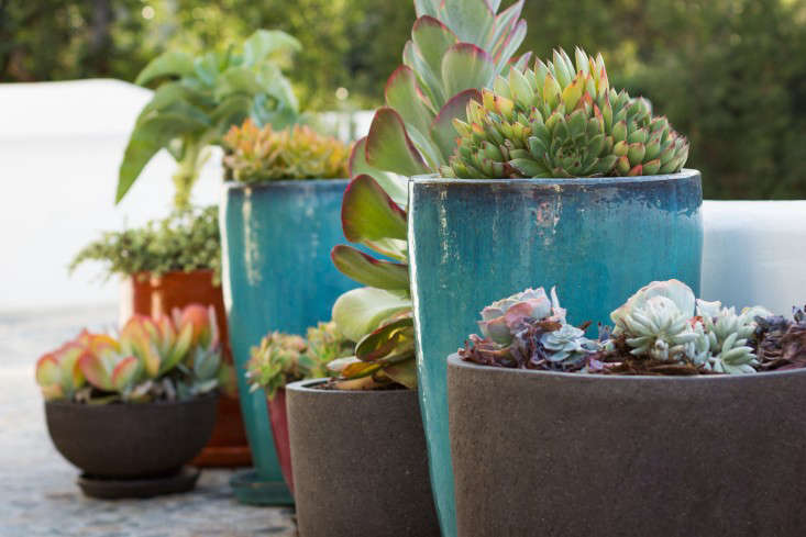 hancock-park-la-garden-visit-stucco-spanish-succulents-gardenista-4