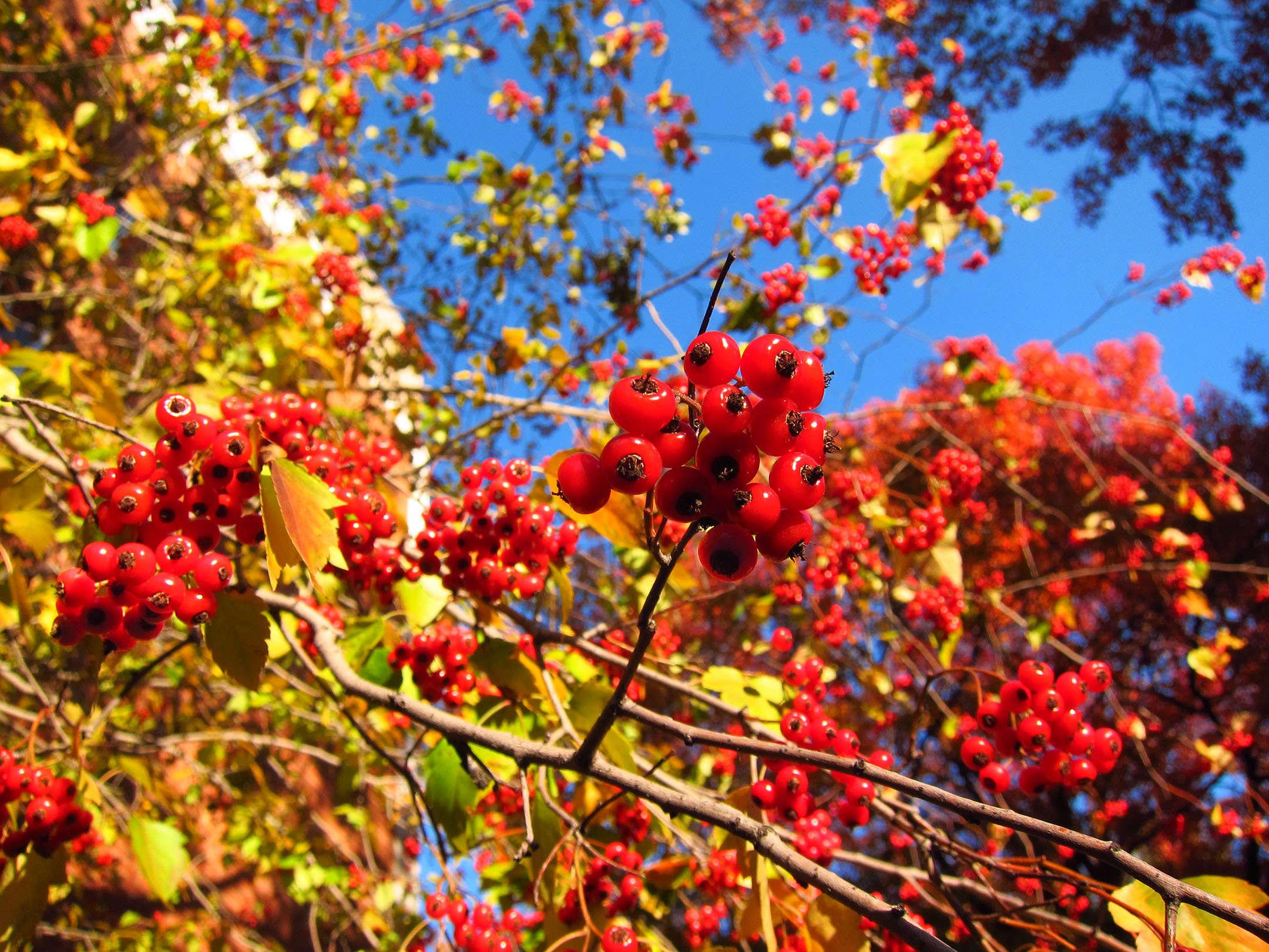 11 mejores árboles a plantar para el follaje de estilo de Nueva Inglaterra - Gardenista