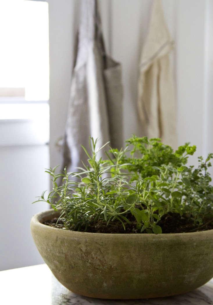 herb-garden-erin-boyle-gardenista-10