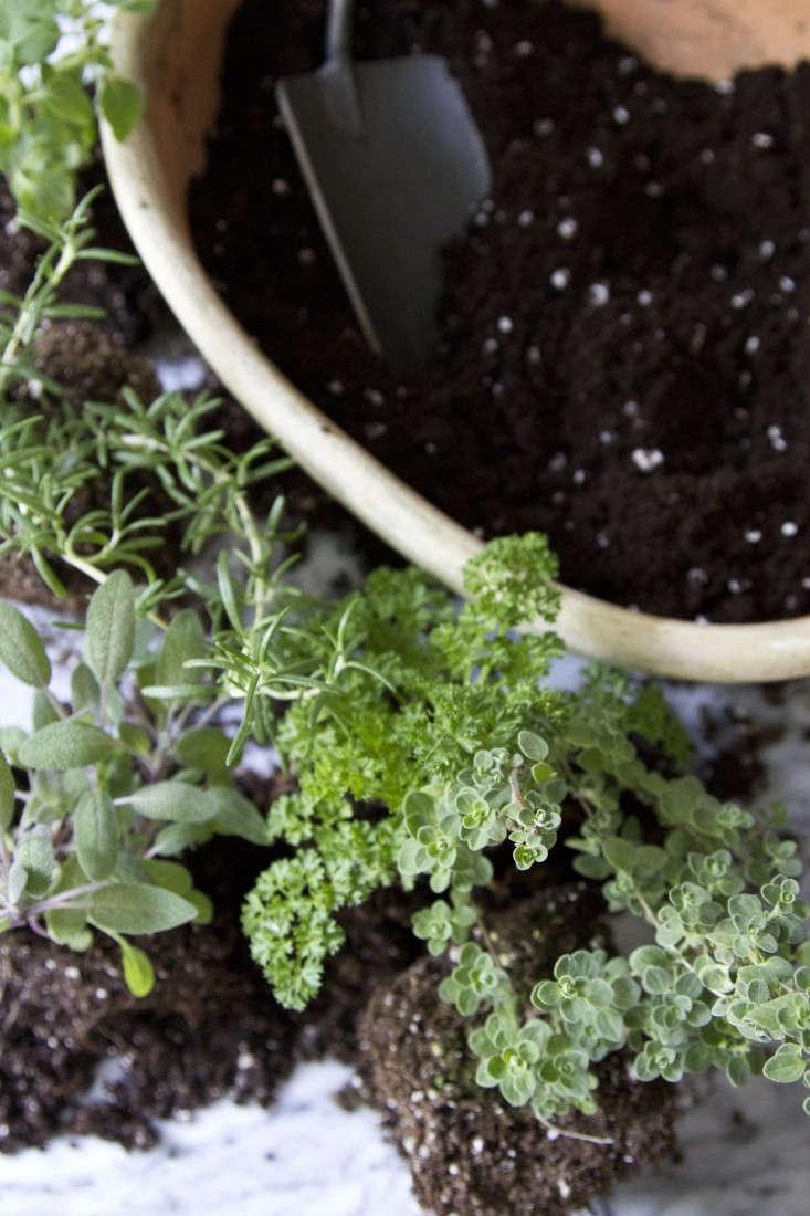 Countertop Herb Garden : Small Space DIY: Countertop Herb Garden : Gardenista