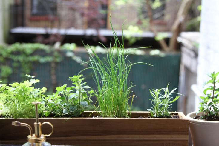 Urban Gardening: Shade Tolerant Herbs To Grow In Your Apartment   Gardenista