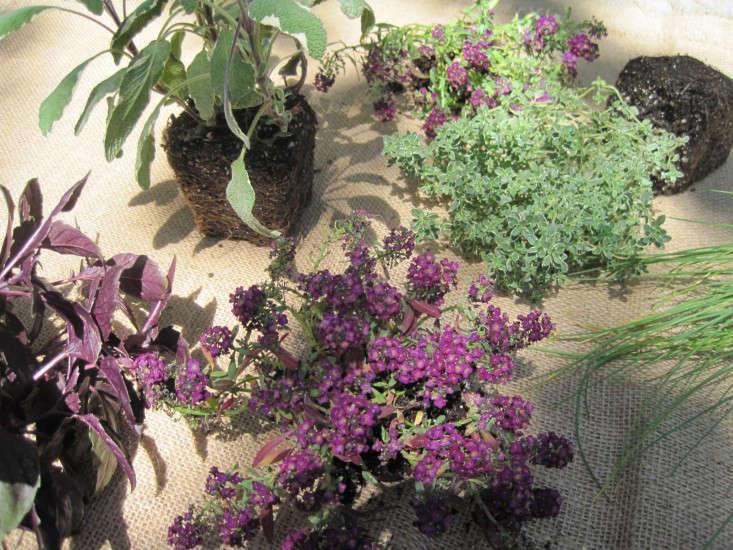 herbsflowers4