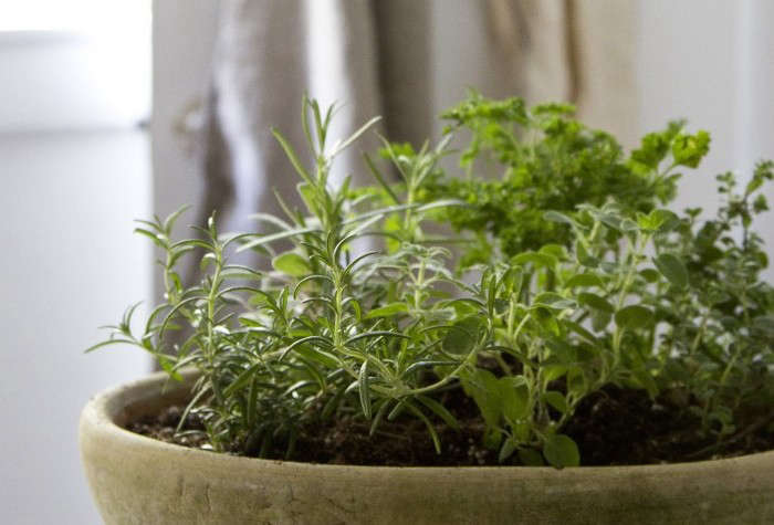 Small Space DIY Countertop Herb Garden Gardenista