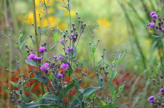 Fall Flowers 8 Best Plants To Move Beyond Mums Gardenista