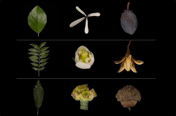 hero-garden-tech-flower-apps-gardenista