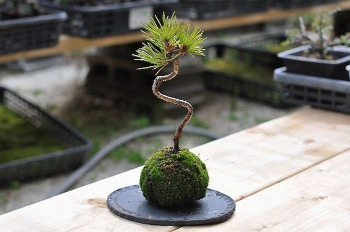 10 Easy Pieces Kokedama Plants Gardenista