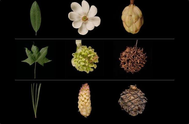 hero-leafsnap-gardenista