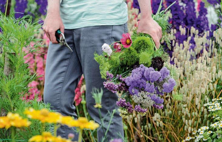 home-grown-cut-flowers-photo-Jason-Ingram