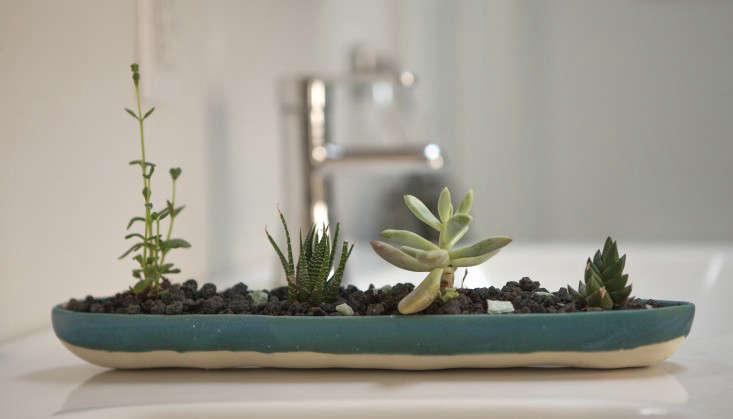 houseplants that take care of themselves via Justin Hulog 5l Gardenista