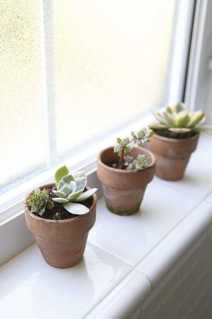 houseplants-for-a-teen-succulents-gardenista