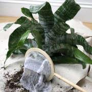 houseplants-history-10-erin-boyle-gardenista