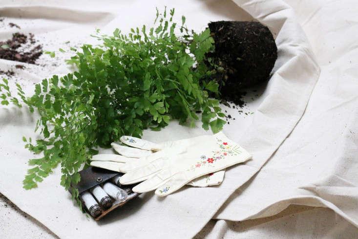 houseplants-history-13-erin-boyle-gardenista