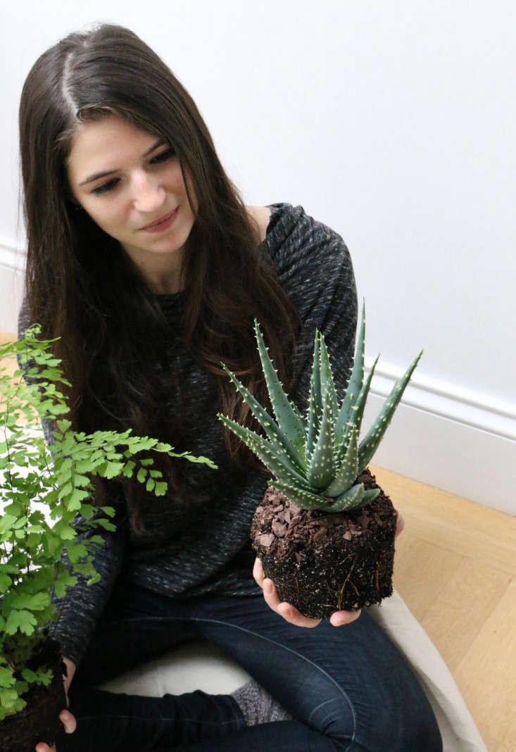 houseplants-history-16-erin-boyle-gardenista