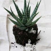 houseplants-history-17-erin-boyle-gardenista