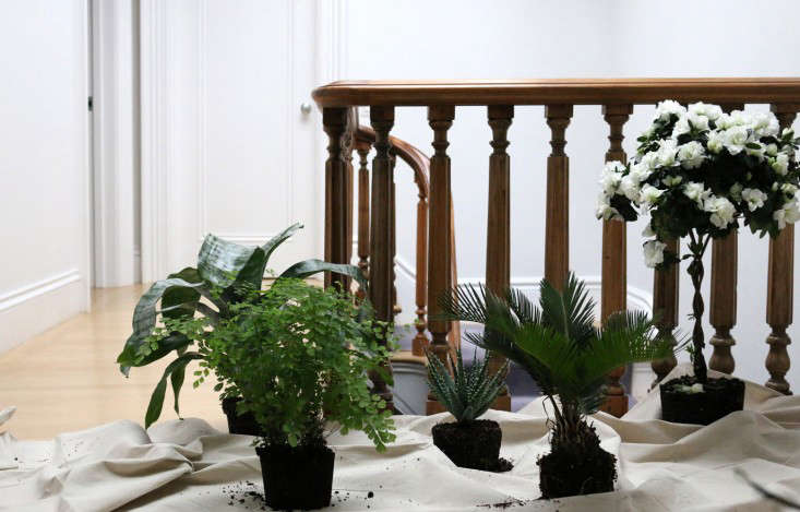houseplants-history-2-erin-boyle-gardenista