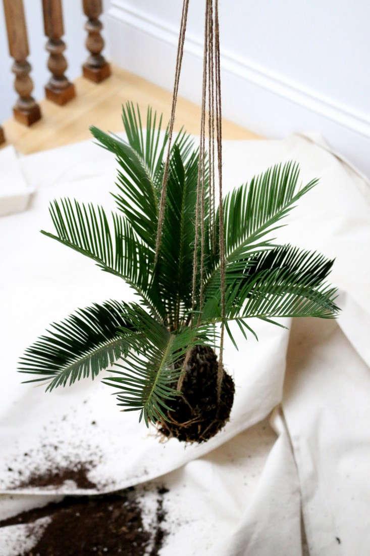 houseplants-history-6-erin-boyle-gardenista