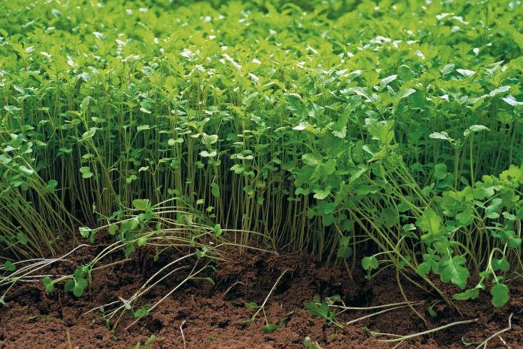 how-to-improve-garden-soil-2-gardenista