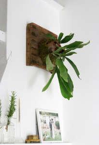 how-to-mount-a-staghorn-fern-8-erin-boyle-gardenista.jpg