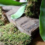 how-to-mount-a-staghorn-fern-10-erin-boyle-gardenista