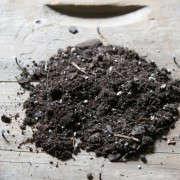 how-to-mount-a-staghorn-fern-13-erin-boyle-gardenista