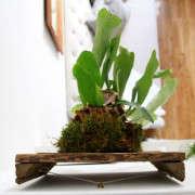 how-to-mount-a-staghorn-fern-2-erin-boyle-gardenista