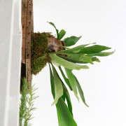 how-to-mount-a-staghorn-fern-3-erin-boyle-gardenista