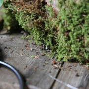 how-to-mount-a-staghorn-fern-7-erin-boyle-gardenista