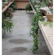huntington-garden-greenhouse-1-laure-joliet-gardenista