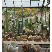 huntington-garden-greenhouse-10-laure-joliet-gardenista