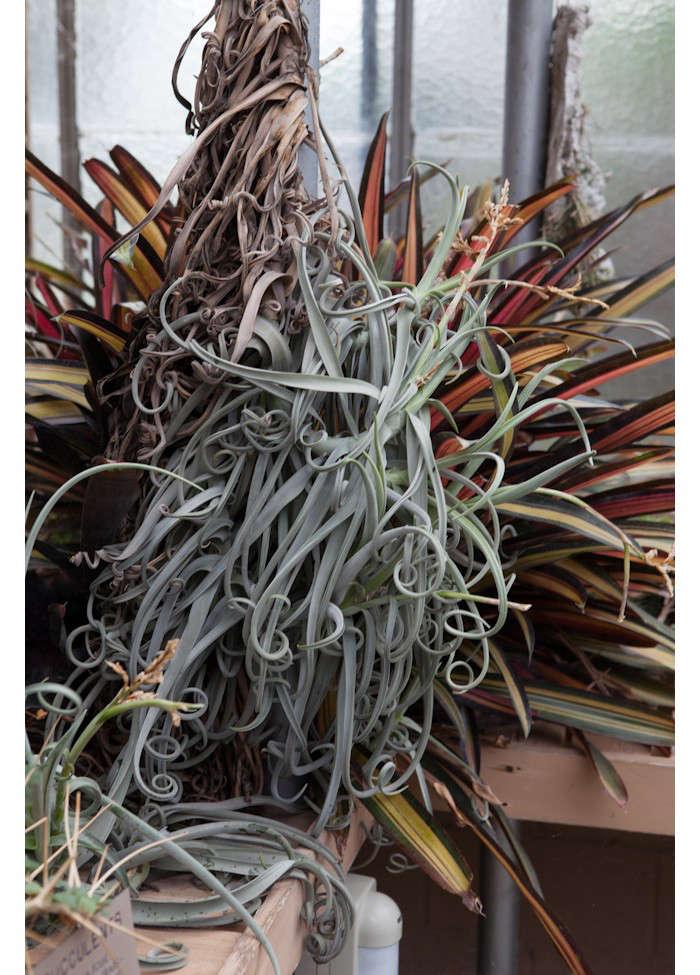 huntington-garden-greenhouse-2-laure-joliet-gardenista