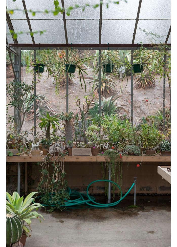 huntington-garden-greenhouse-4-laure-joliet-gardenista